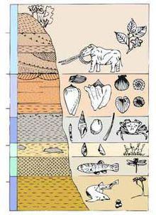 Profilo_geologico_delle_Rocche