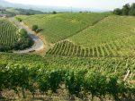 vineyards-in-Bussia