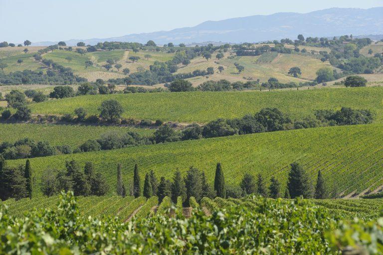 val delle rose vineyards_1